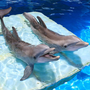stroies_detail_dolphin_360x360.jpg