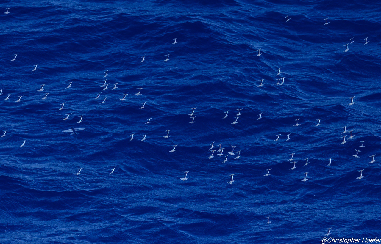 09_flying squid.jpg