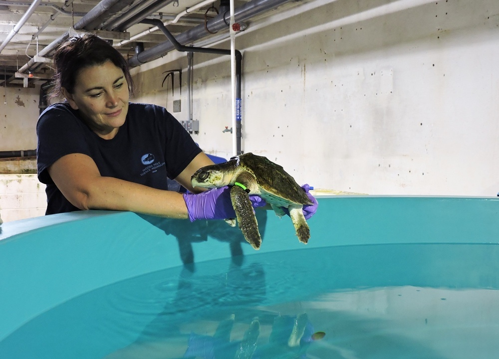 vet examining turtle over tank