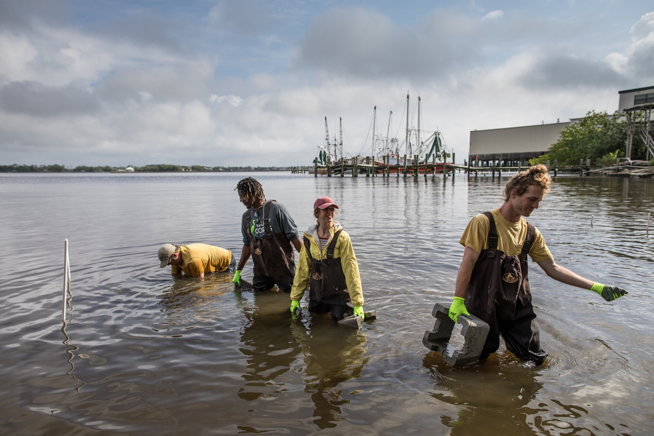 Members of the GulfCorps create a living shoreline that will be come a home to oysters and other water creatures in Mississippi.