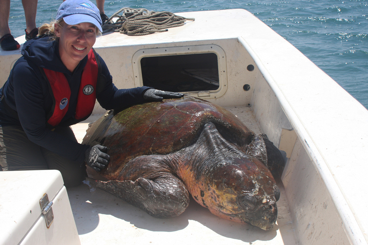 Dr. Larisa Avens with a loggerhead sea turtle.