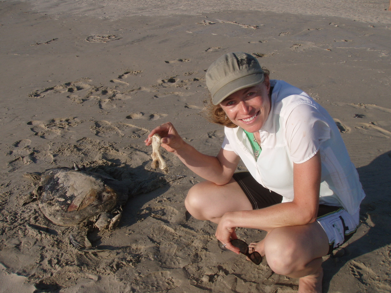 Dr. Cali Turner Tomascewicz holding a humerus bone from a stranded sea turtle.