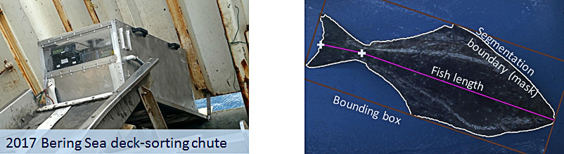 Camera chutes provide quick, accurate measurements of halibut bycatch from images taken as halibut are released by sliding through the chute. Quick release means most halibut go back into the sea alive. Photo credit: EM project.