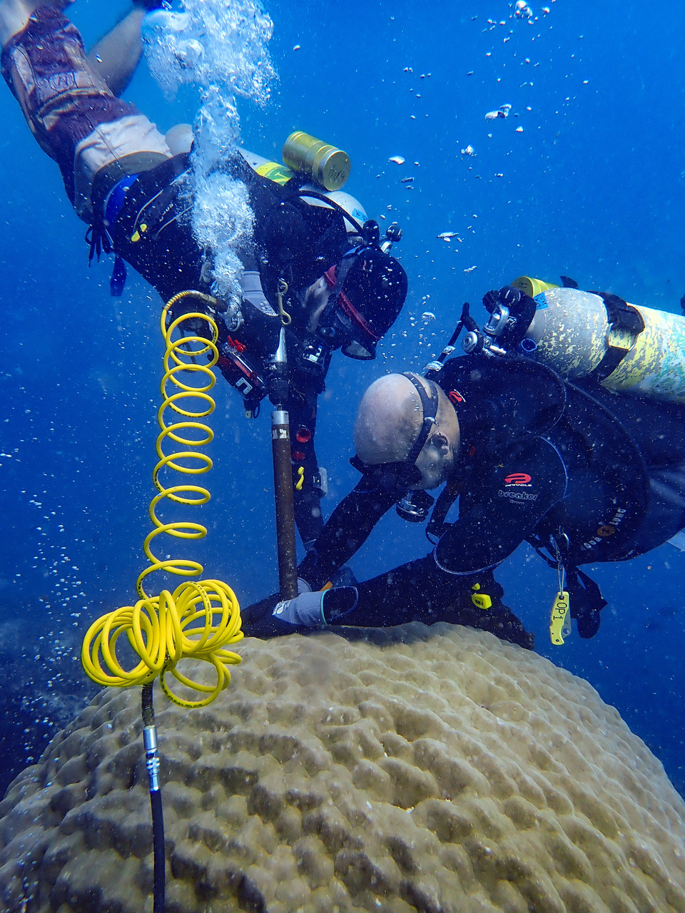 Scientists work carefully to extract a core of skeleton from a coral head. This core acts as a record, allowing scientists back in the lab to learn more about the coral's history and possible ocean conditions over time. (Photo: NOAA Fisheries/Hannah Barkley)