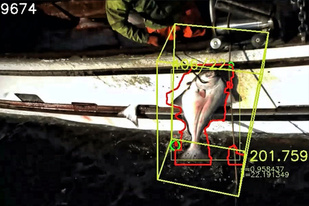 Machine vision view of catch in real time.
