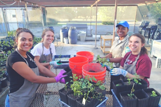 Veteran Xavia Jackson, and coworkers preparing vegetation for planting along the Putah Creek in California.