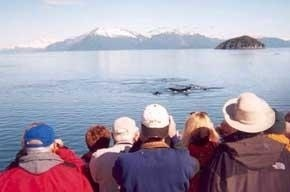 People whale watching from a boat.